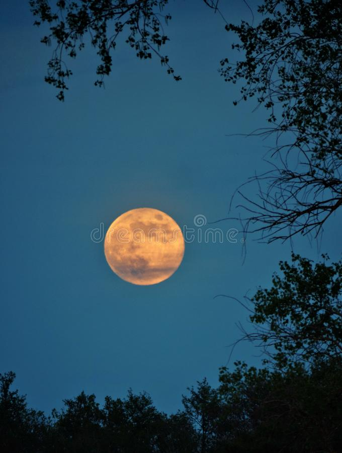 Moon rise and light over green forest royalty free stock photos