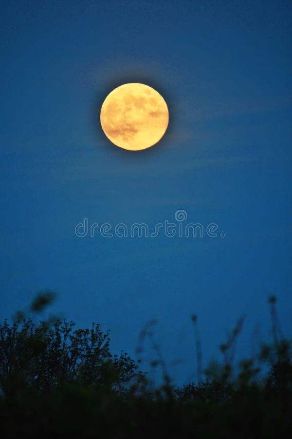 Moon rise and light over green forest stock image