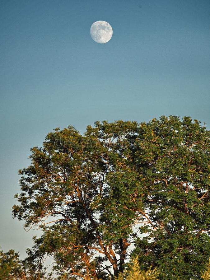 Moon rise and light over green forest royalty free stock images