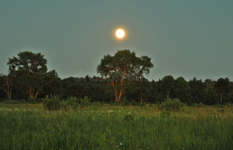 Moon rise and light over green forest stock photo