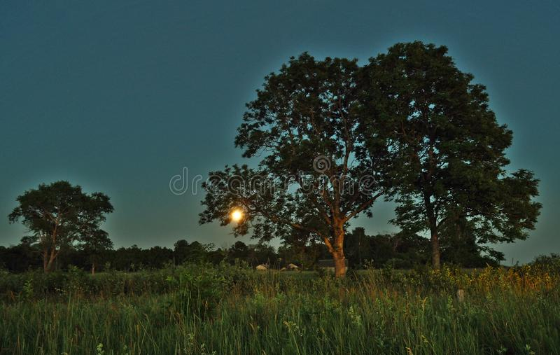 Moon rise and light over green forest royalty free stock photography
