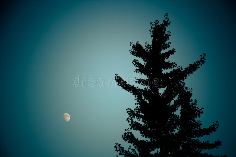 Moon and maidenhair tree royalty free stock photos