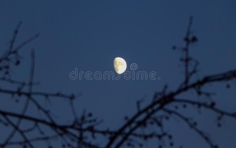 The moon at midnight with the branches of a tree. stock photography