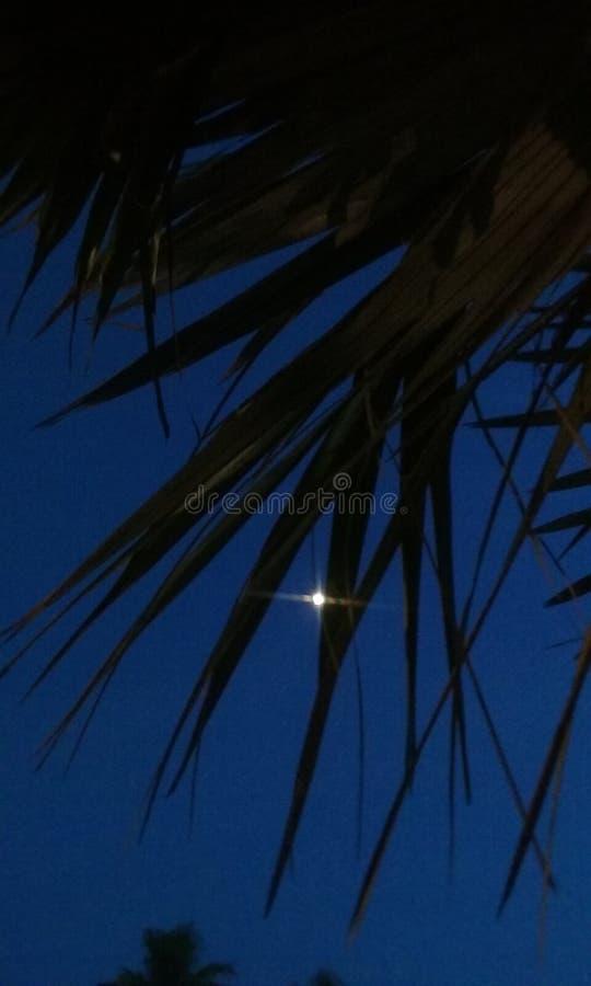 Moon nella palma alla spiaggia fotografia stock