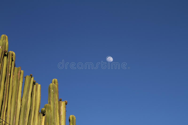 Moon over cacti royalty free stock photography