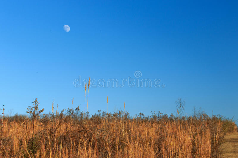 Moon over field royalty free stock photography