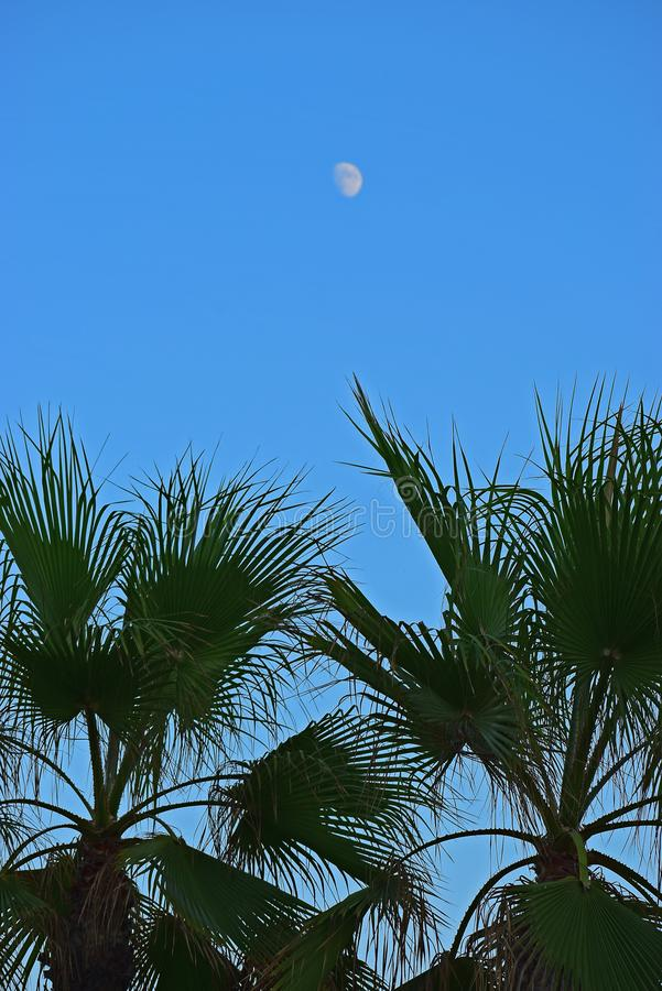 The Moon Over Palm Trees With Blue Sky Background royalty free stock image