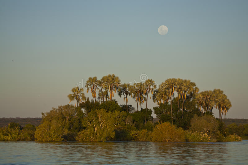 Landscape: Moon over palms, Zambezi river royalty free stock photo