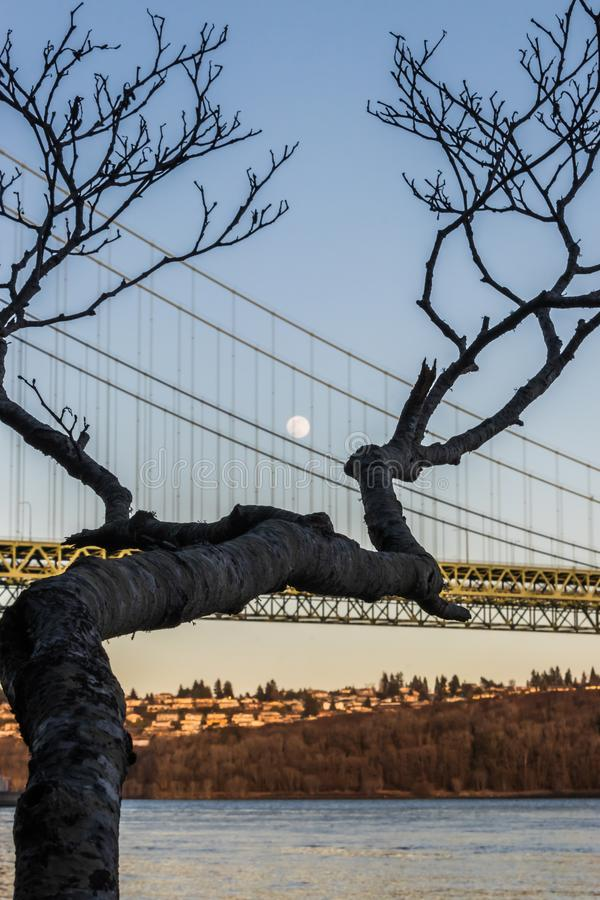 Moon over a suspension bridge behind a tree branch royalty free stock images