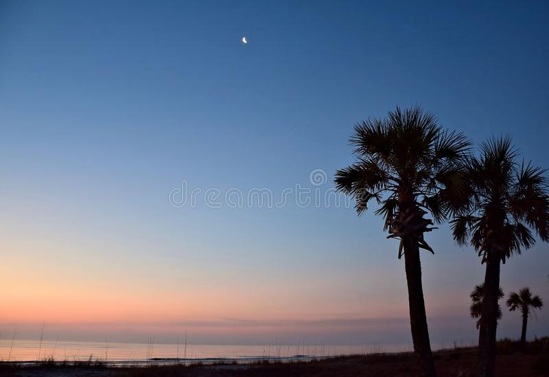 Moon Over Two Palms royalty free stock images