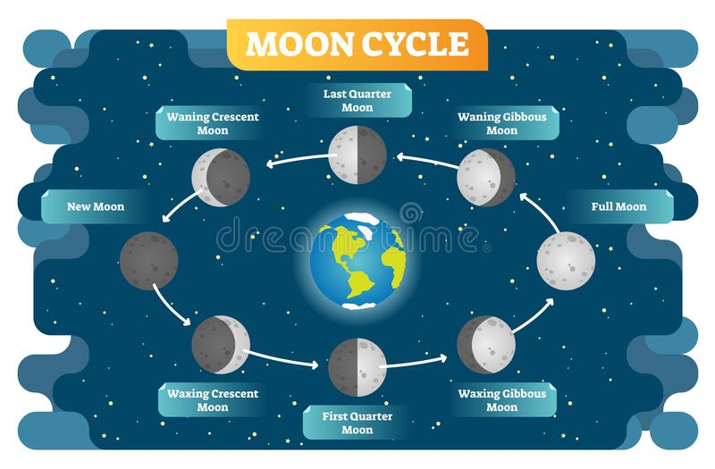 Moon Phase Cycle Vector Illustration Diagram Poster Stock Vector