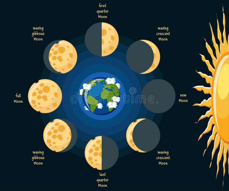 Moon Phases Stock Vector Illustration Of Astronomy 81609747
