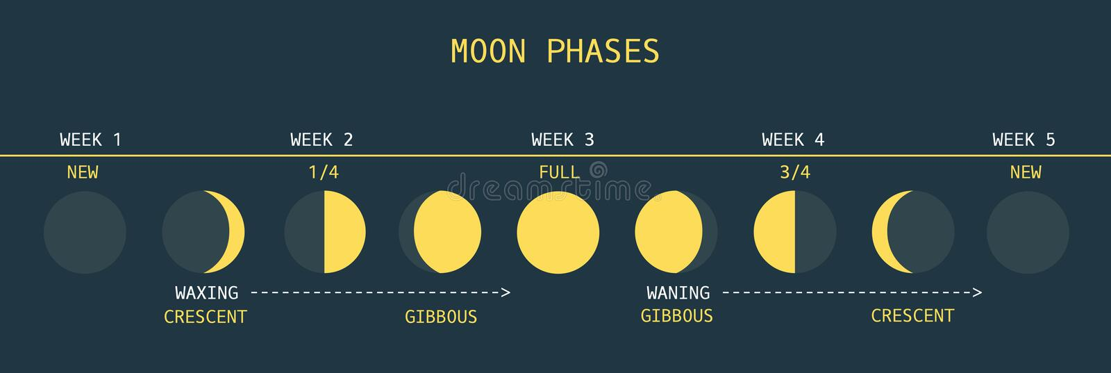 Moon Phases. Vector Illustration of Informative Chart of Monthly Moon Cycle