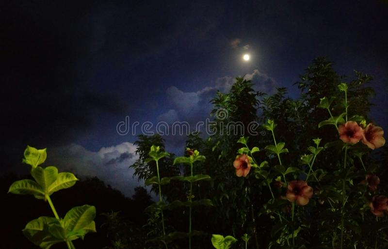 Moon rays showering on flowers. Flowers are glowing joyously because of the moon rays showering on them royalty free stock photo