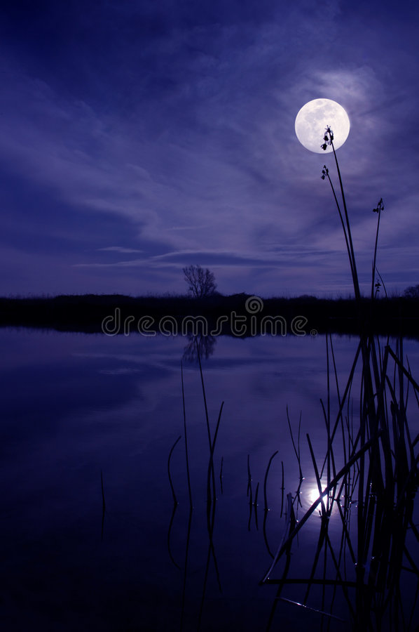 Moon And Reeds royalty free stock photos