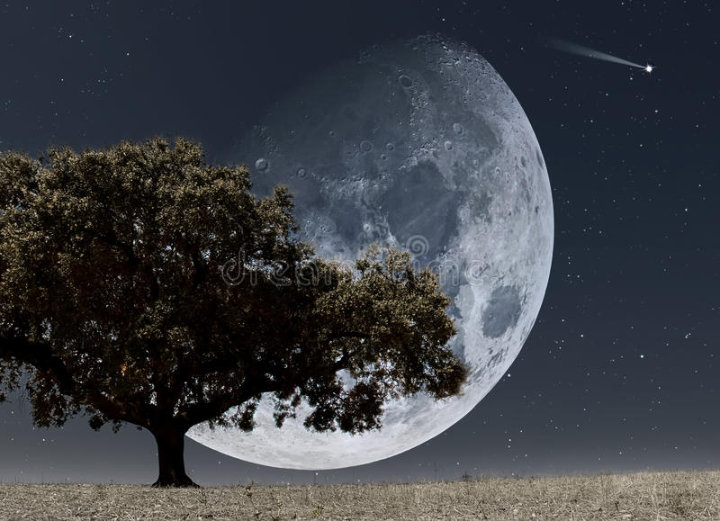Download Moon rise stock illustration. Image of light, branch - 23608463