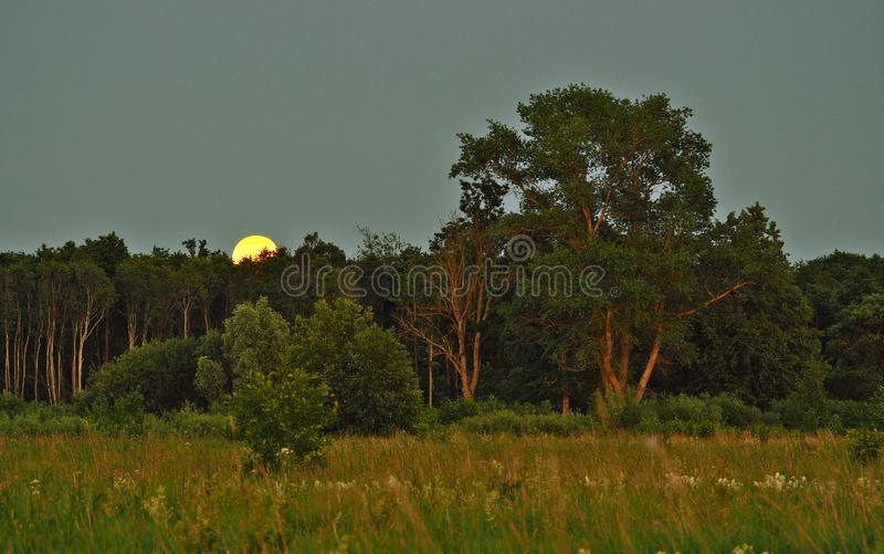 Moon rise and light over green forest stock images