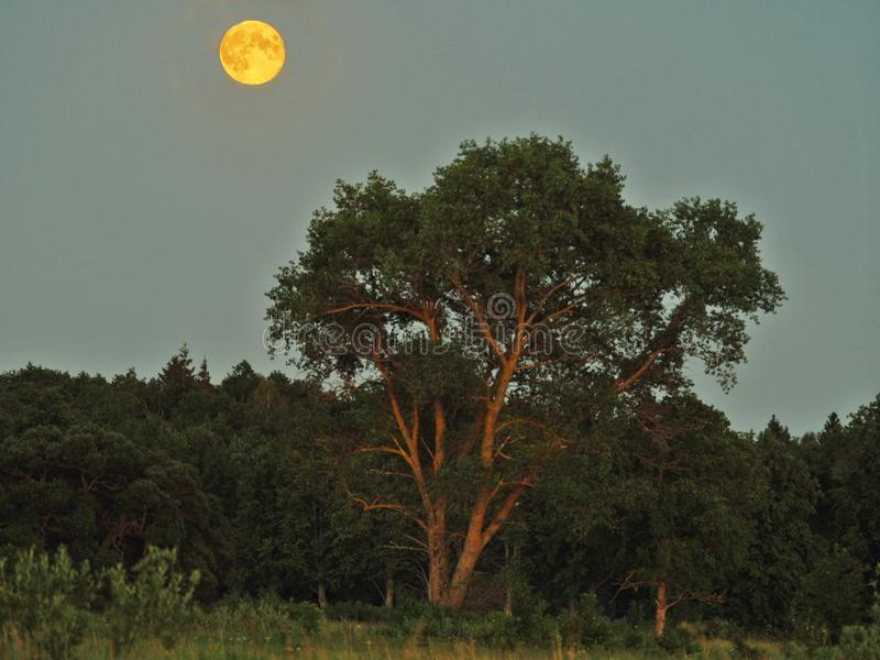 Moon rise and light over green forest royalty free stock photo
