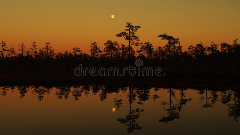 Sunset moon rise over forest and orange sky royalty free stock photo