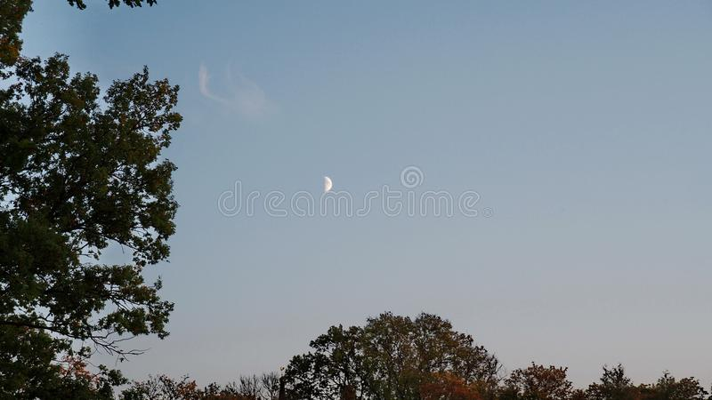 Moon rise over forest royalty free stock images