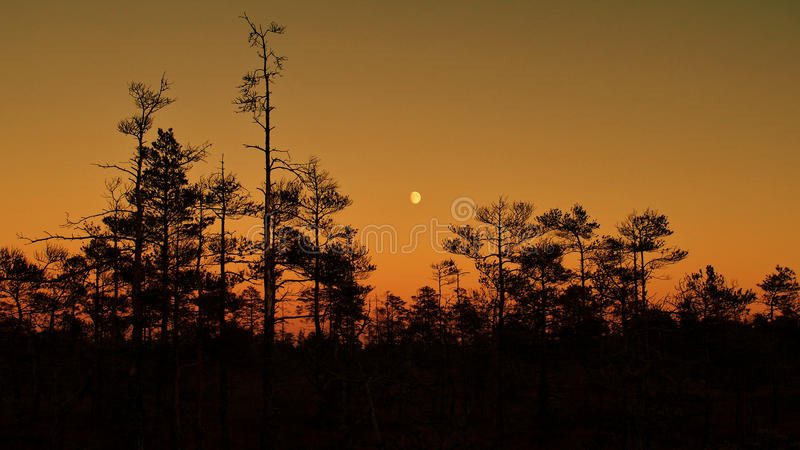 Orange sky and Moon at sunset. Moon rise after sunset and orange sky stock photos