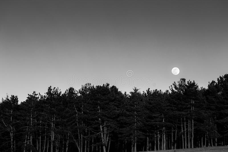Moon rising up behind a forest royalty free stock photo