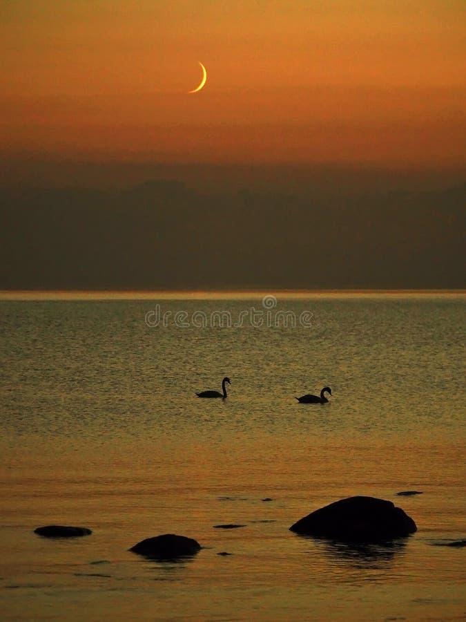 Moon set over sea stone coast and swans stock photo