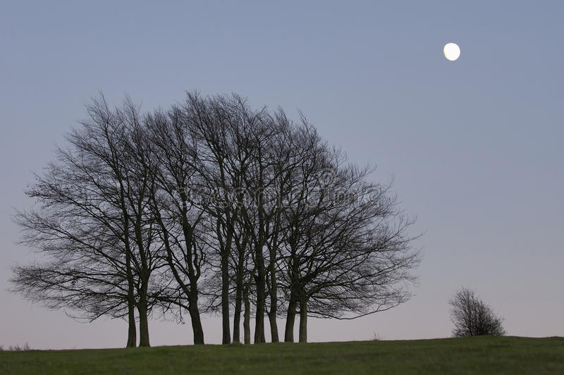 Moon and small group of trees after sunset. Near full Moon and small group of trees after sunset royalty free stock image