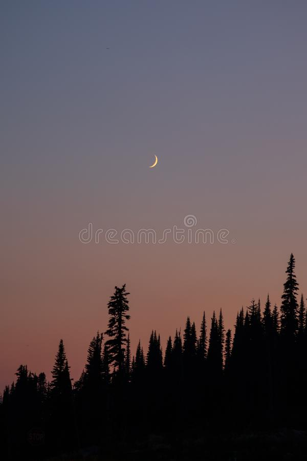Moon with Sunset in Forrest. This is a picturew of the Moon during Sunset in a forrest at Mount Rainier National Park, Washington stock photos