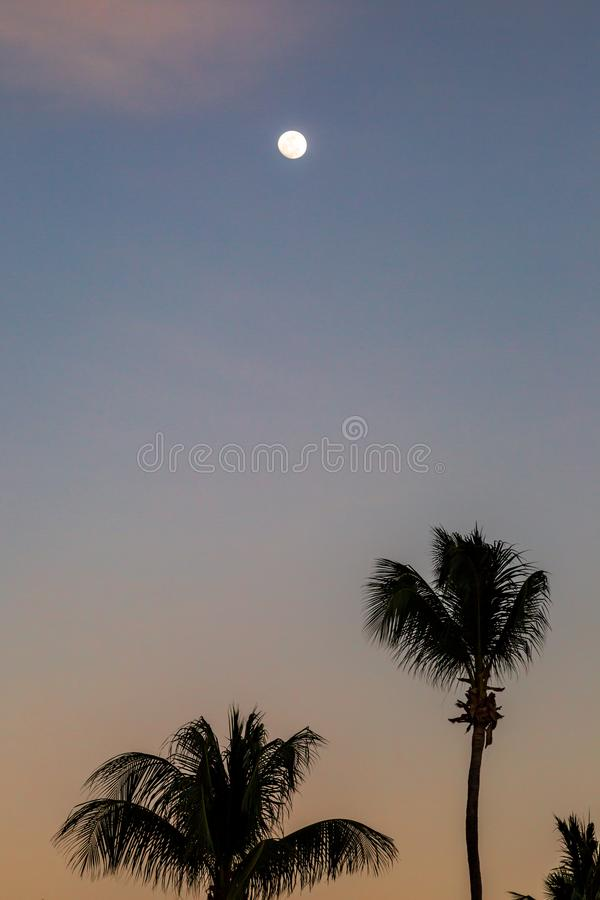 The Moon at Sunset. The moon and palm trees with a sunset sky royalty free stock photos