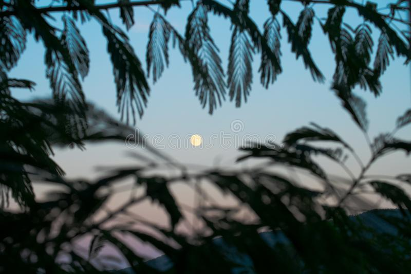 Moon in the sunset sky. Moon in the sunset dusk sky in a mountainous landscape seen from behind palm leaves royalty free stock photos