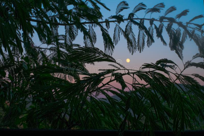Moon in the sunset sky. Moon in the sunset dusk sky in a mountainous landscape seen from behind palm leaves stock image