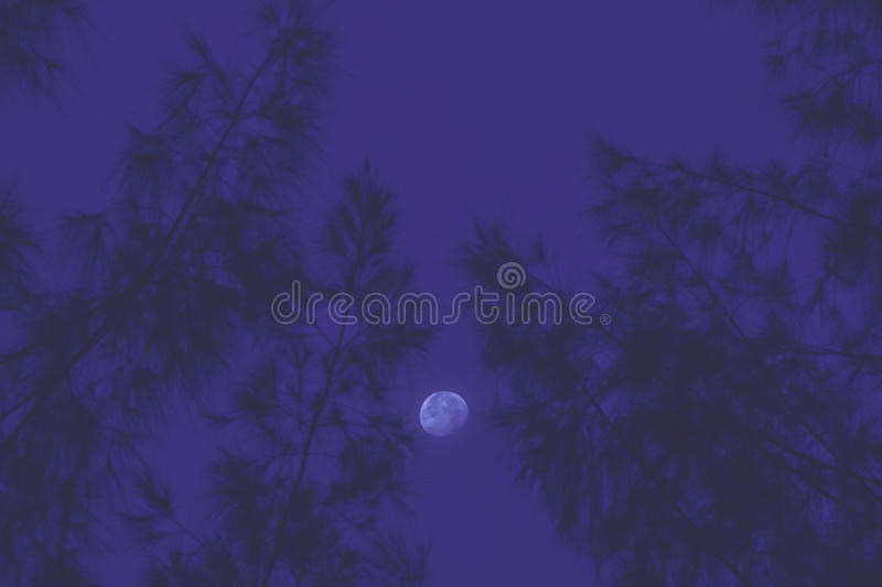 Moon with tree abstract background. royalty free stock image