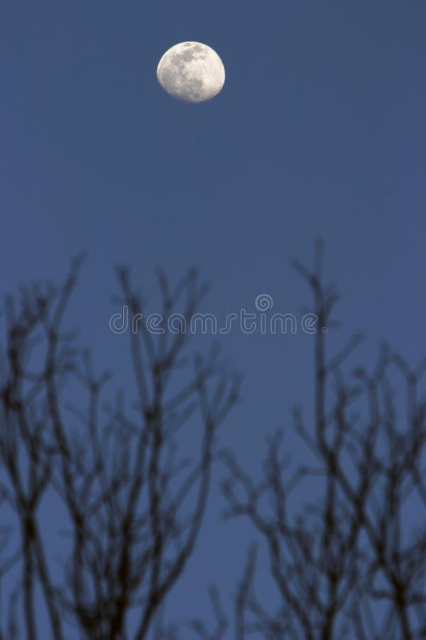 Moon and trees royalty free stock photography