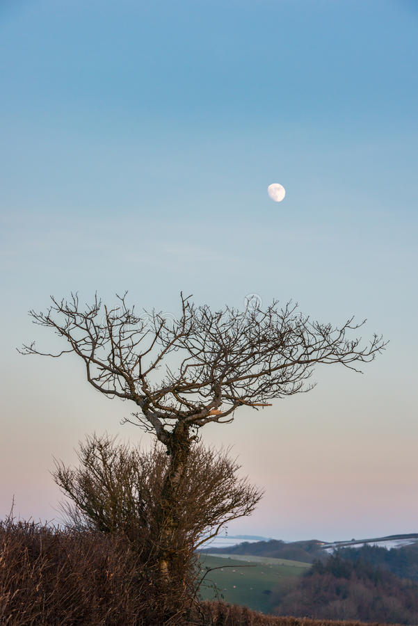 Moon and trees in winter royalty free stock images