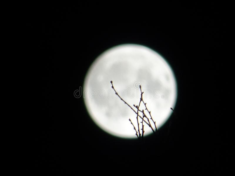 Moon and twigs stock photography