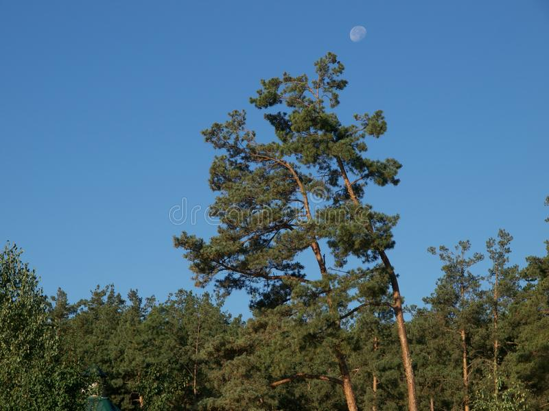Moon una foresta immagine stock
