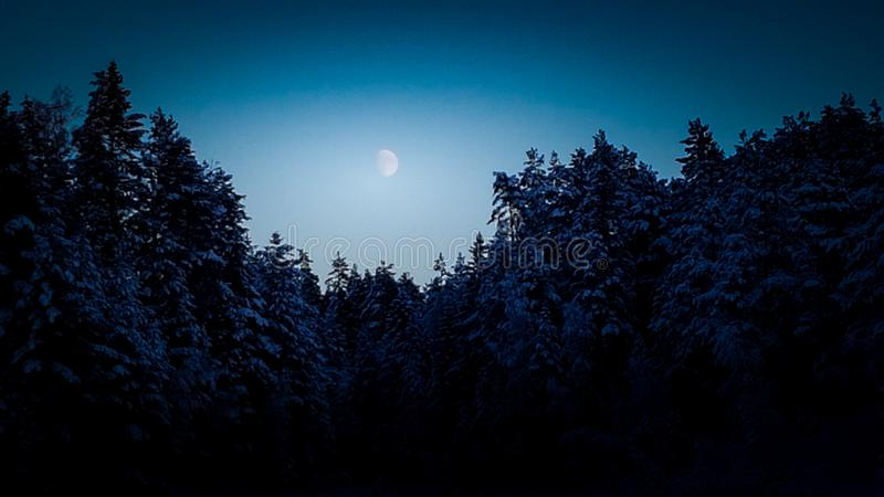 Winter moon at night. The moon watching down from the sky on a winter landscape in the night. The threes asære frosty with a hint of warm for the dark shadows stock photos
