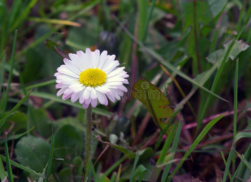 Tiny flower in the green stock photography