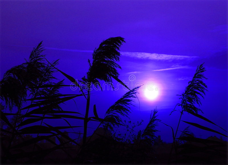 Download Moonlight Stock Photo - Image: 519000
