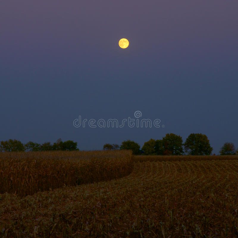 Free Moonlight At Harvest Time Stock Photo - 35554060