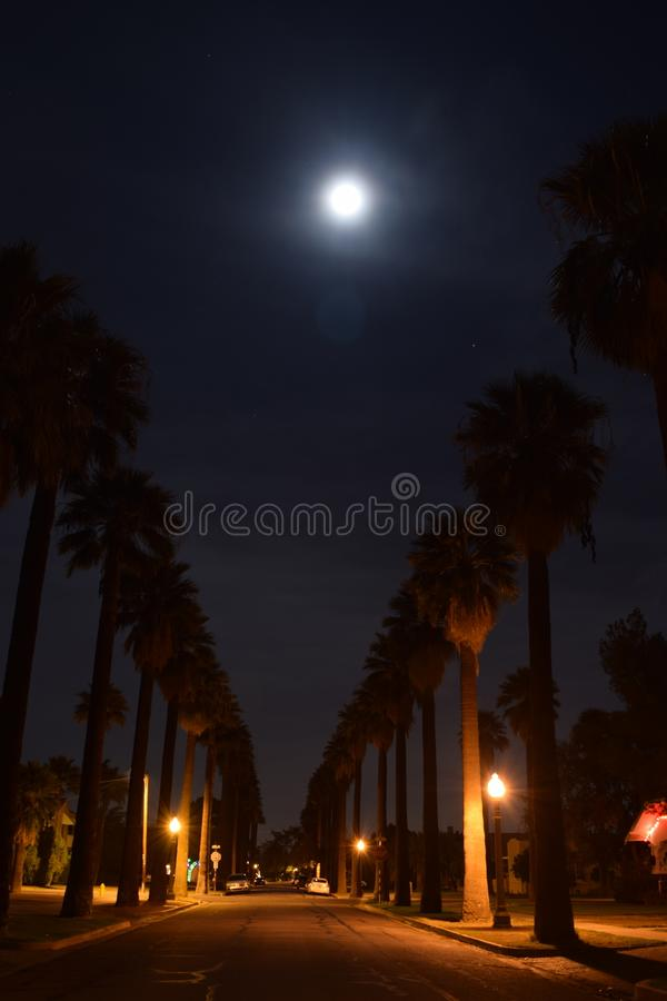 Moonlight night between trees stock photo