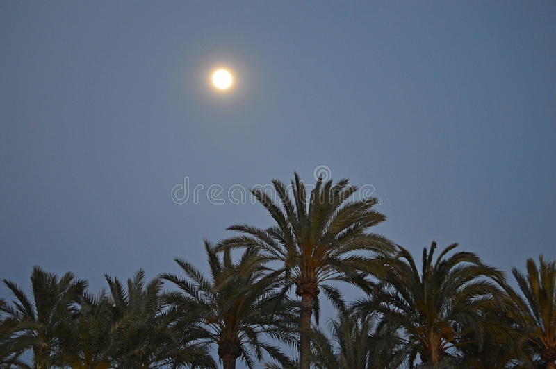 Moonlight And Palm Trees stock photography