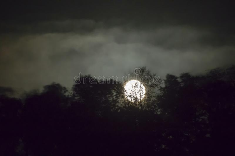 Moonlit forest with fog. Moonlight through trees with foggy skies stock photography