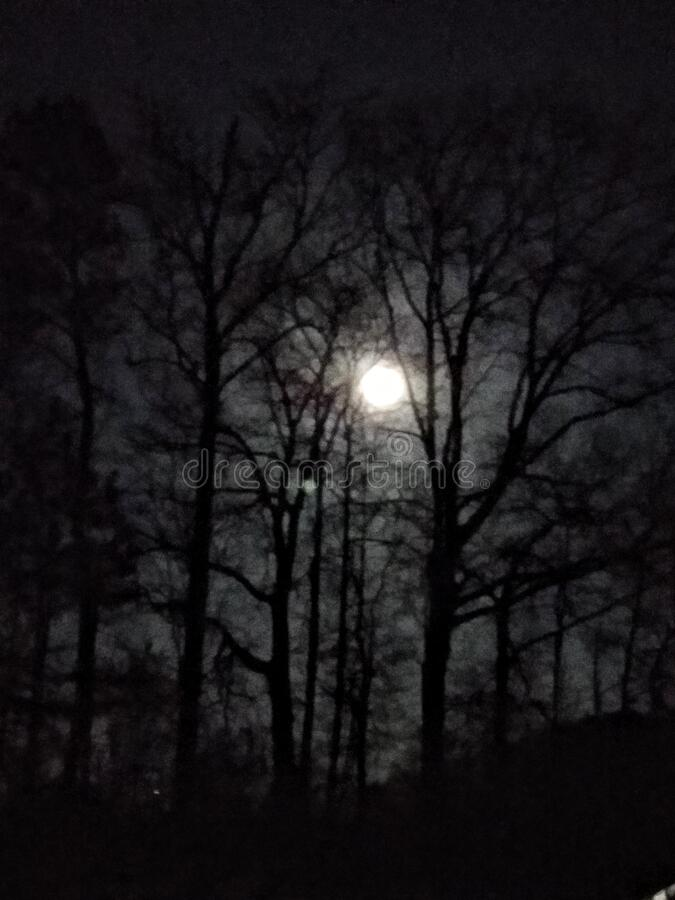 Moonlight in the trees stock photos