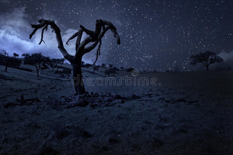 Moonlit naked tree royalty free stock image