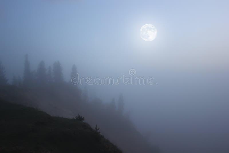 Moonlit night royalty free stock photography