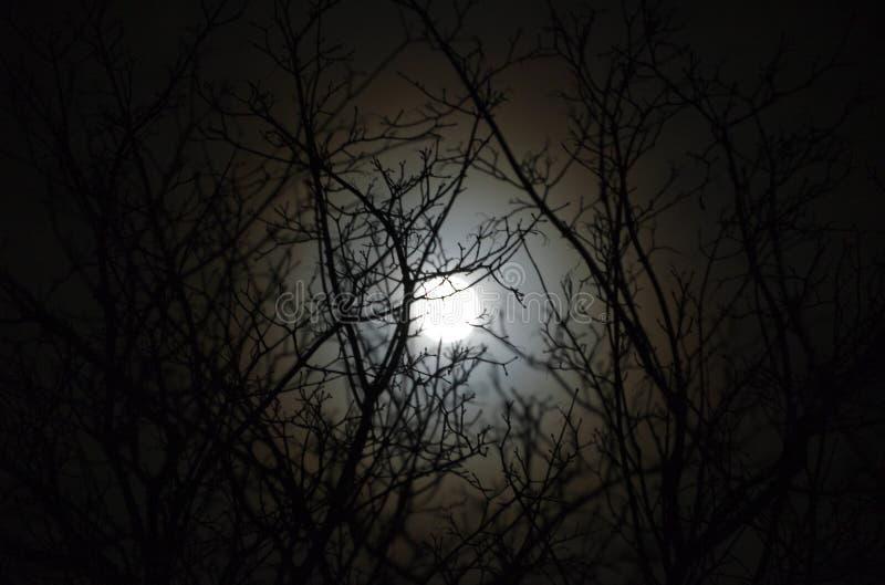 Moonlit tree royalty free stock photos
