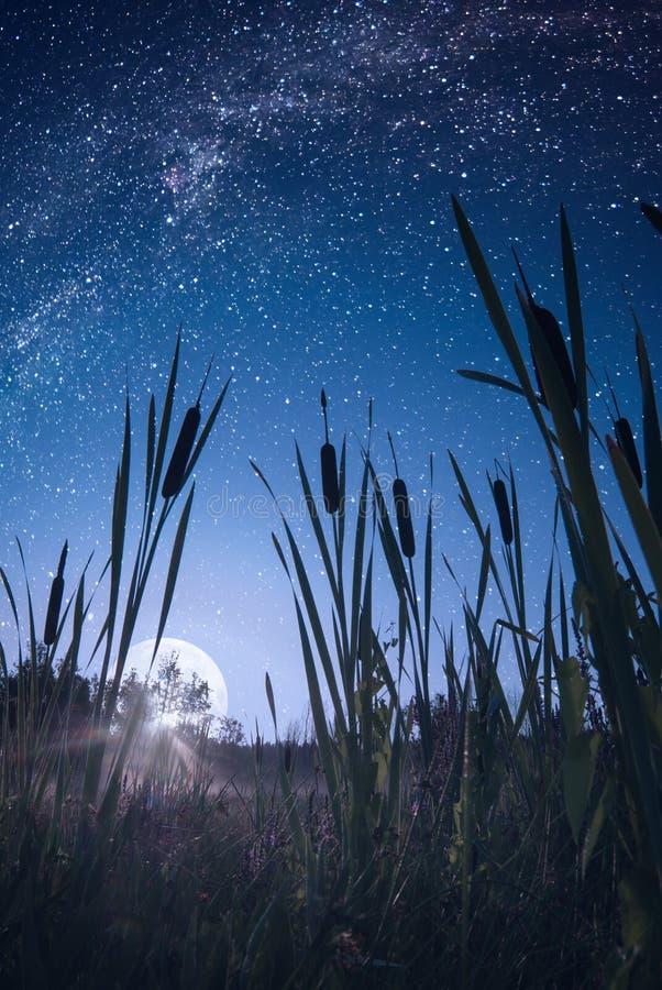 Moonrise över träsket arkivfoto