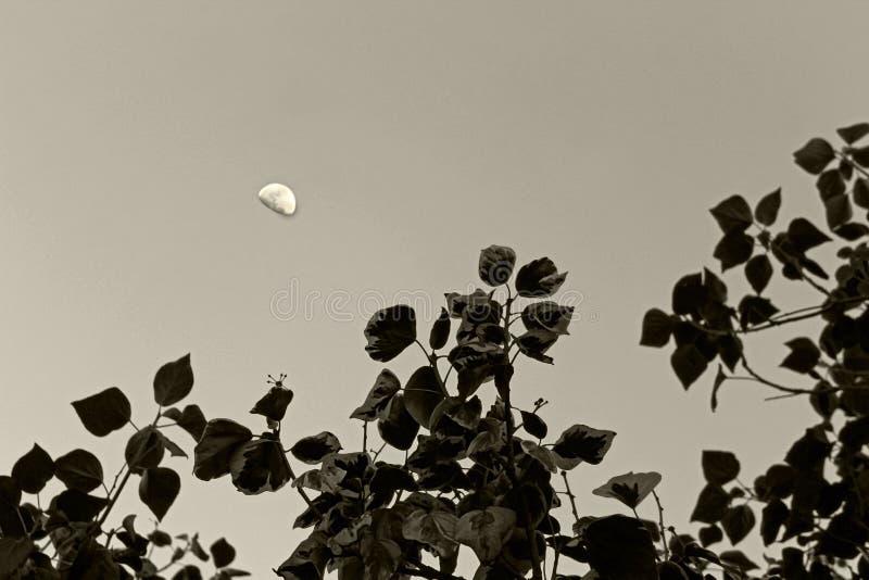 Moonrise über dem Wald lizenzfreie stockfotografie